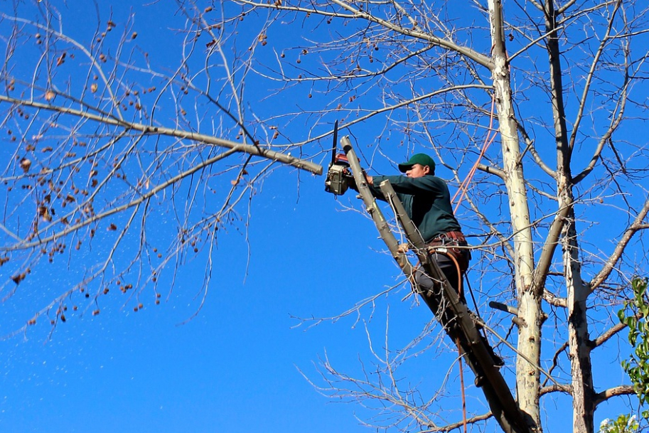 this image shows tree chipper in Costa Mesa, California