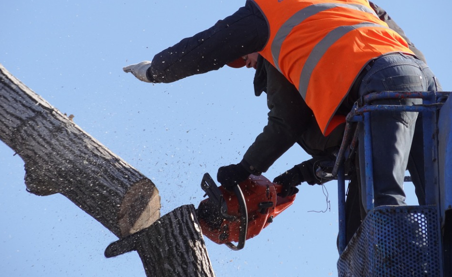 this image shows tree removal in Costa Mesa, California
